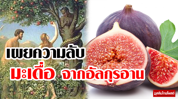 เผยความลับ เหตุที่อัลลอฮฺทรงสาบานด้วยผลมะเดื่อ